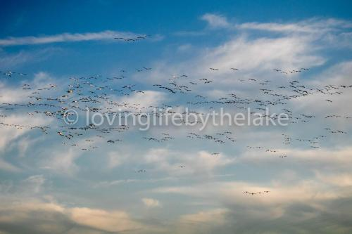 Geese in the clouds
